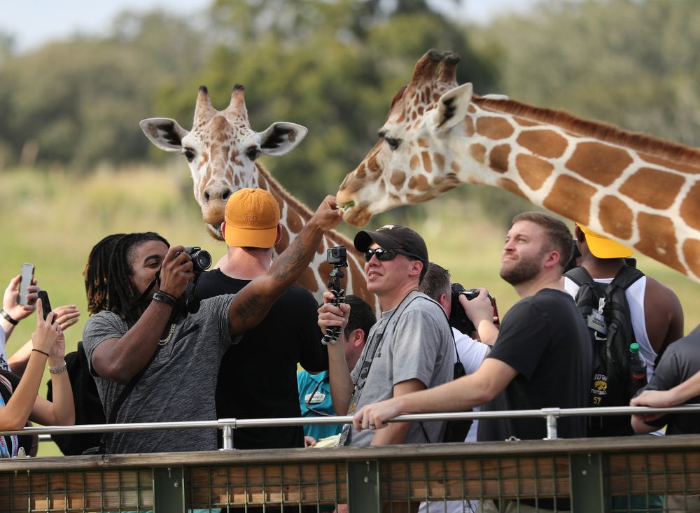 Iowa Hawkeyes defensive back Devonte Young (17) feeds a giraffe during an Outback Bowl team event Saturday, December 29, 2018 at Busch Gardens in Tampa, FL. (Brian Ray/hawkeyesports.com)