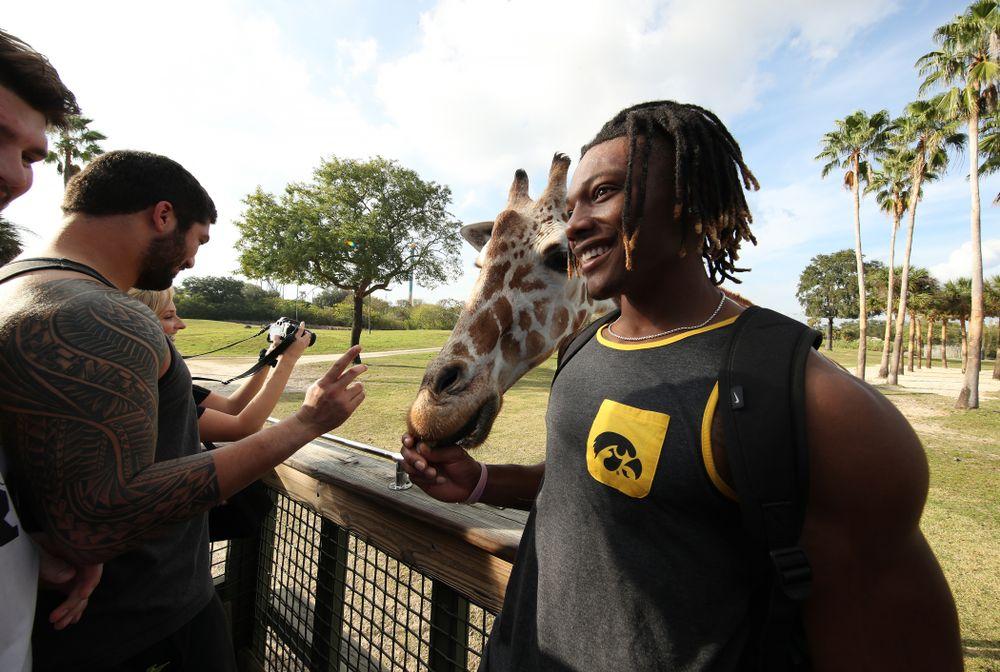 Iowa Hawkeyes wide receiver Brandon Smith (12) feeds giraffes during an Outback Bowl team event Saturday, December 29, 2018 at Busch Gardens in Tampa, FL. (Brian Ray/hawkeyesports.com)