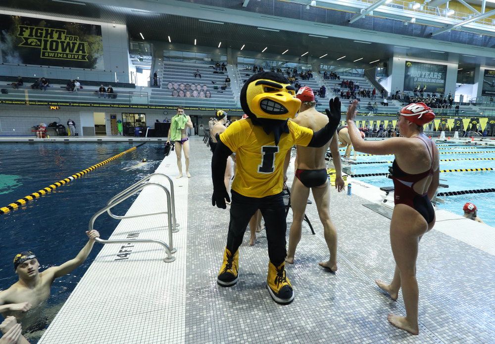 Herky the Hawk during a double dual against Wisconsin and Northwestern Saturday, January 19, 2019 at the Campus Recreation and Wellness Center. (Brian Ray/hawkeyesports.com)