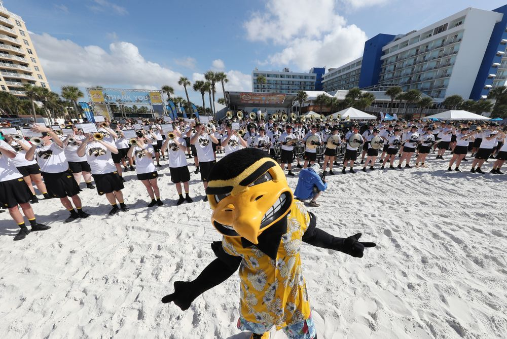 Herky The Hawk and the Hawkeye Marching Band during the Outback Bowl Beach Day Sunday, December 30, 2018 at Clearwater Beach. (Brian Ray/hawkeyesports.com)