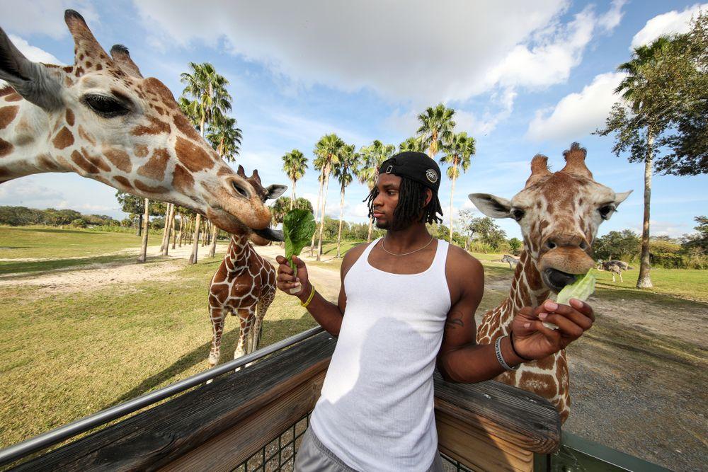 Iowa Hawkeyes wide receiver Ihmir Smith-Marsette (6) feeds a giraffe during an Outback Bowl team event Saturday, December 29, 2018 at Busch Gardens in Tampa, FL. (Brian Ray/hawkeyesports.com)